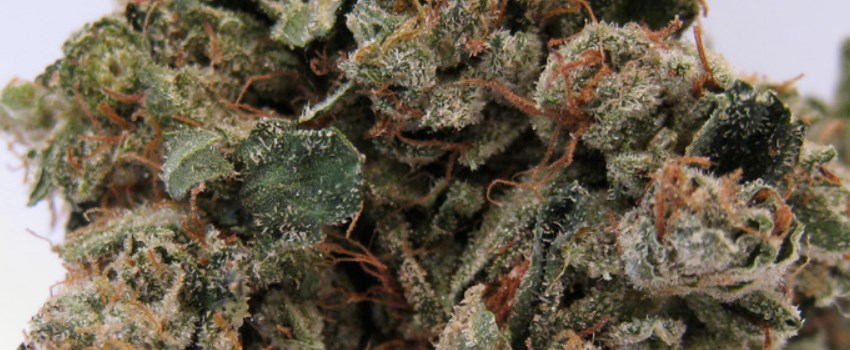 OG Kush Medical Use and Benefits
