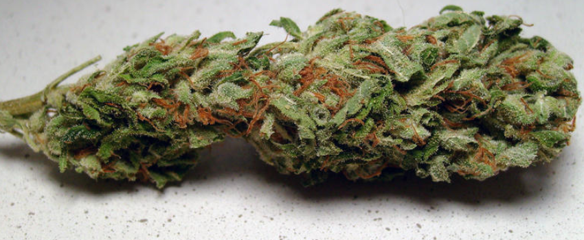 Trainwreck Medical Use and Benefits