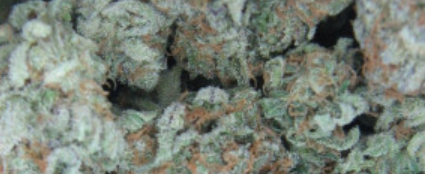White Widow Medical Use and Benefits