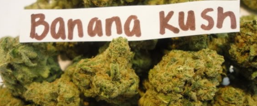 Banana Kush Effects