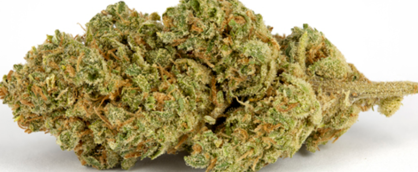 Jedi Kush Medical Use and Benefits