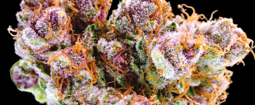 Black Cherry Soda Odor and Flavors