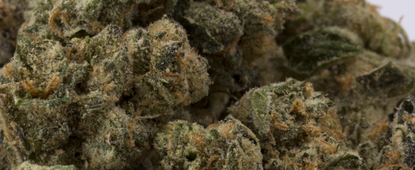 Animal Cookies Odor and Flavors