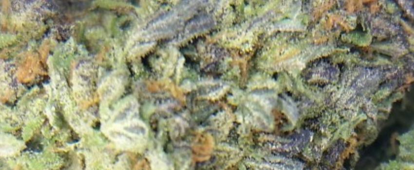 Purple Sour Diesel Effects