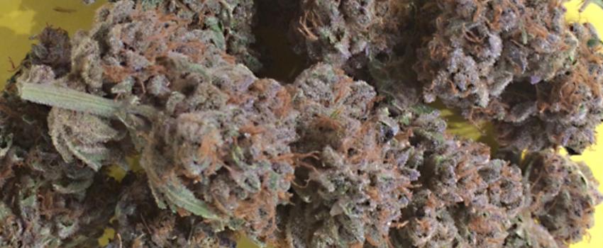 Purple Sour Diesel Odor and Flavors