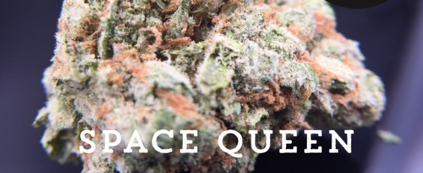 Space Queen Odor and Flavors
