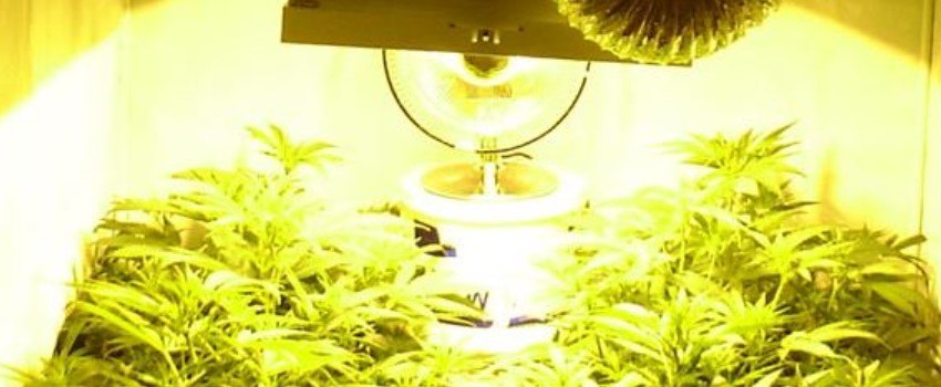 Mind the Grow Lamps
