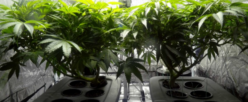 We have the right to grow indoors