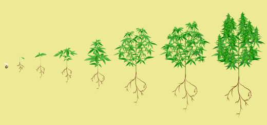 Stages-of-growth-header-1280x800