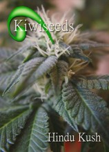 Hindu Kush Seeds