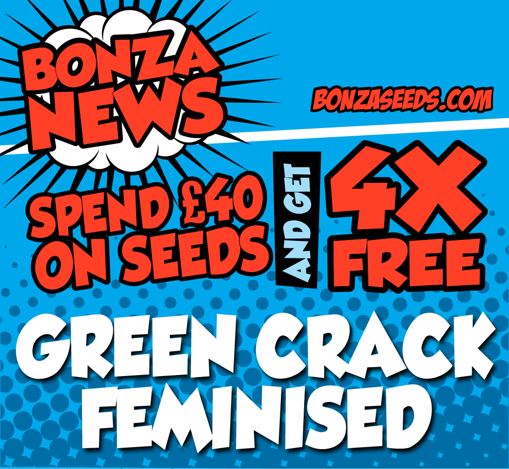 BONZA_NEWSLETTER_MARCH_GREEN_CRACK.png