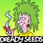 dready-feminized-cannabis-seeds.jpg