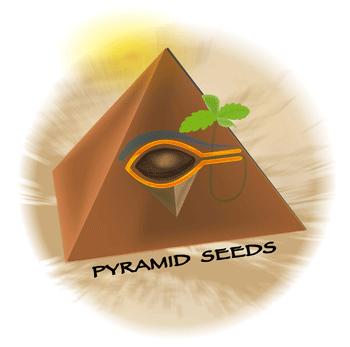 logopyramid.png